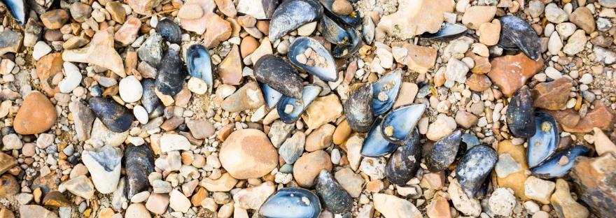 Whitstable pebble beach