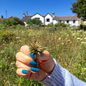 Cornwall Blue Nail Varnish