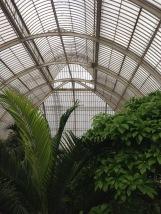 Kew Gardens Magnolia